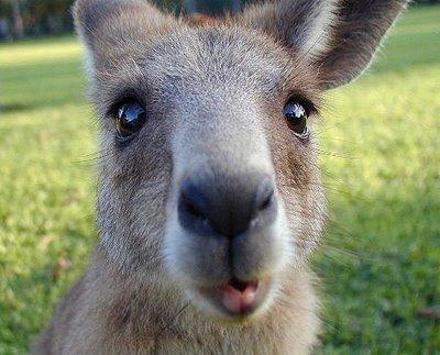 Portales de Empleo en Australia